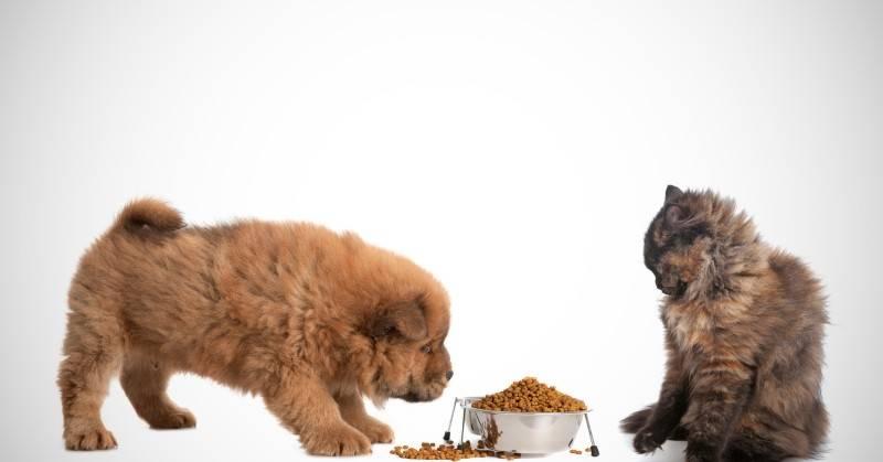 Кормление кошки кормом для собак: сухой и влажный, что будет с питомцем