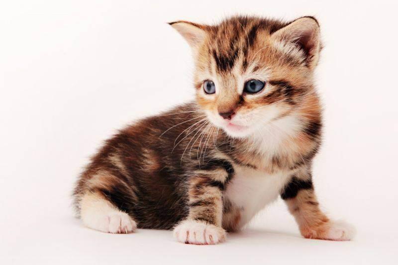 Новорожденные котята (24 фото): через сколько дней после рождения они открывают глаза и начинают ходить? сколько весит котенок? правила ухода