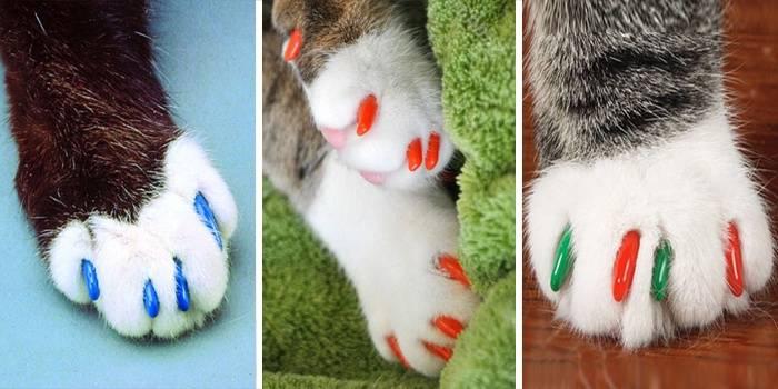 Антицарапки для кошек: отзывы ветеринаров о пользе и вреде мягких коготков