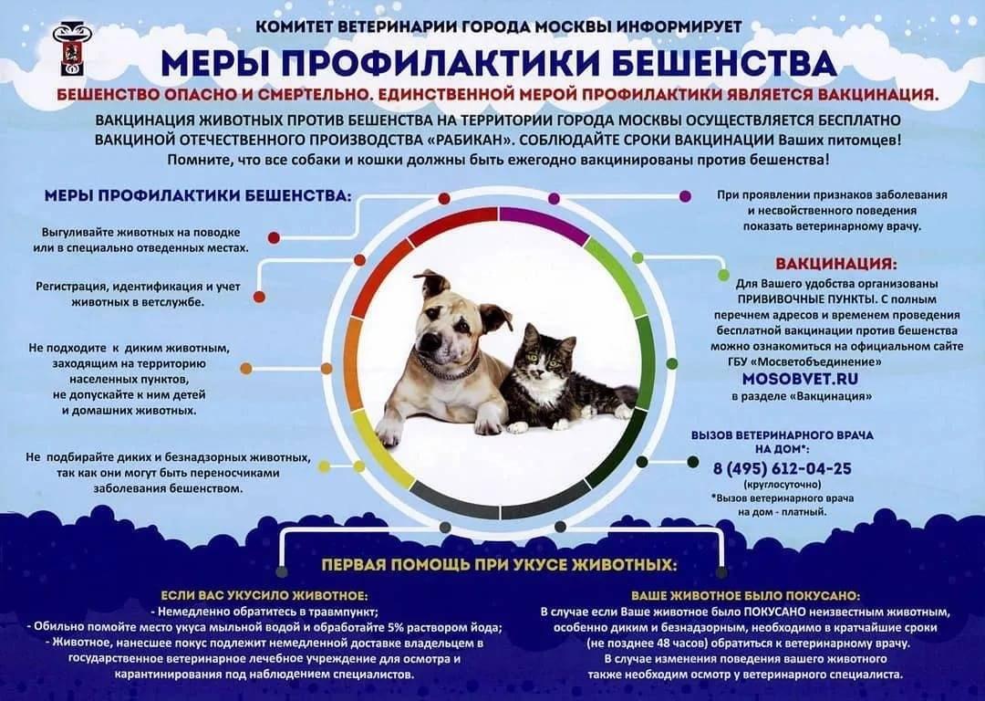 Вакцинация против бешенства собак и кошек: периодичность, лучшие вакцины, особенности процедуры
