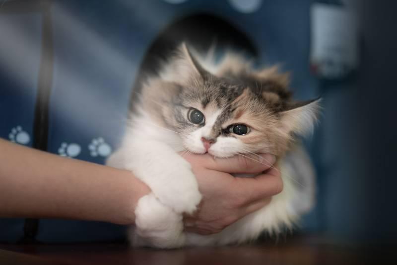 Почему коты кусают хозяев