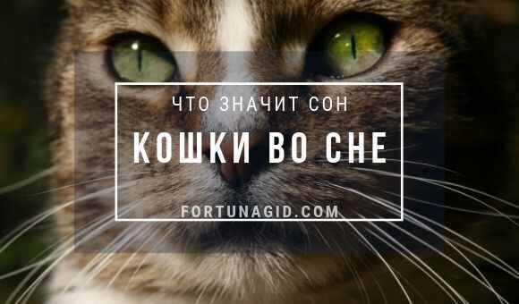 Сонник кошки много и ласкаются. к чему снится кошки много и ласкаются видеть во сне - сонник дома солнца
