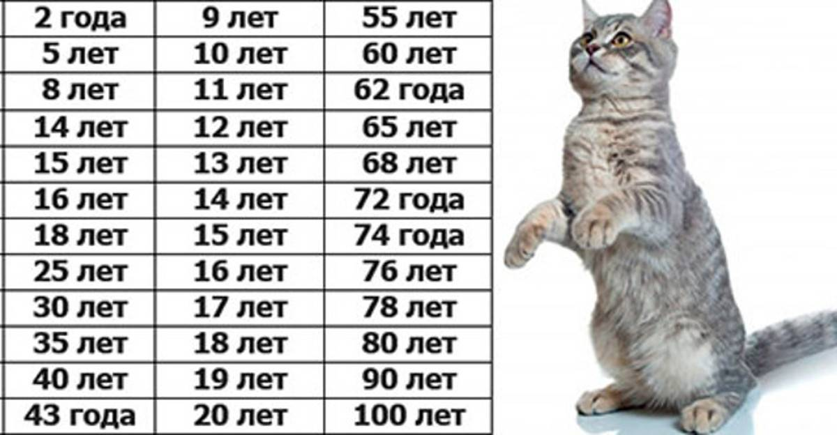 Сколько по человеческим меркам 14-летней кошке