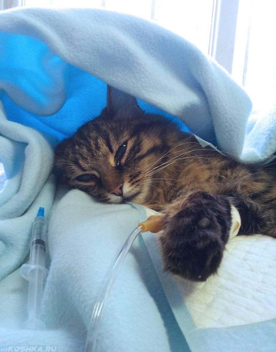 Кошка отравилась – что делать в домашних условиях, каковы симптомы отравления?