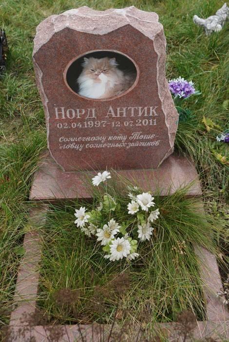 Как похоронить кошку: места и способы, законодательные нормы, особенности захоронения зимой