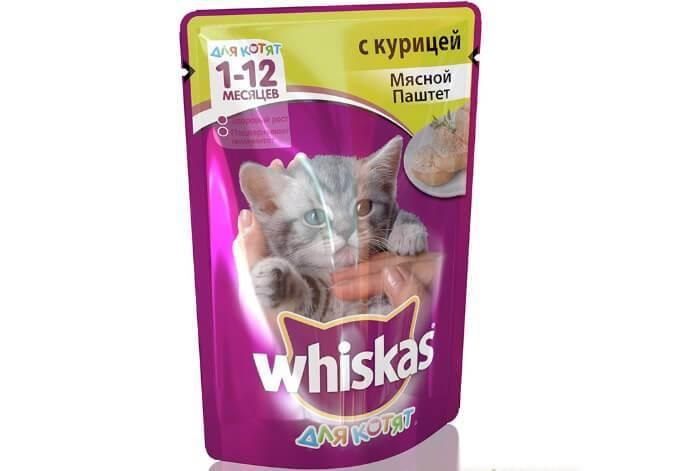 Можно ли одновременно кормить кошку сухим и влажным кормом?