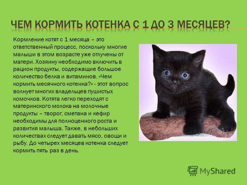 Чем кормить котенка в 4 месяца? сколько пищи ему нужно в этом возрасте?