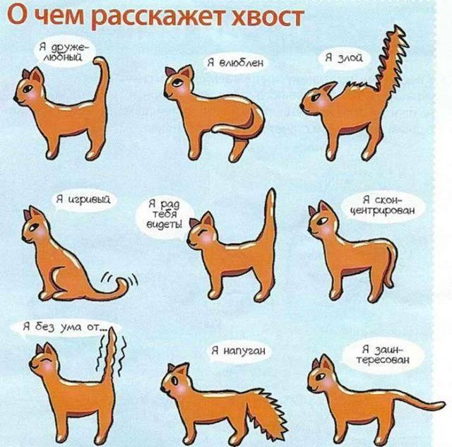 Почему кошка дергает хвостом и кожей на спине и нервно вылизывается: причины странного поведения