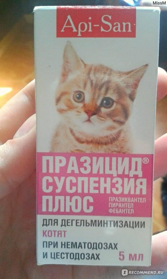 Празицид – суспензия и таблетки, инструкция по применению для котят и взрослых кошек: как давать, в какой дозировке?