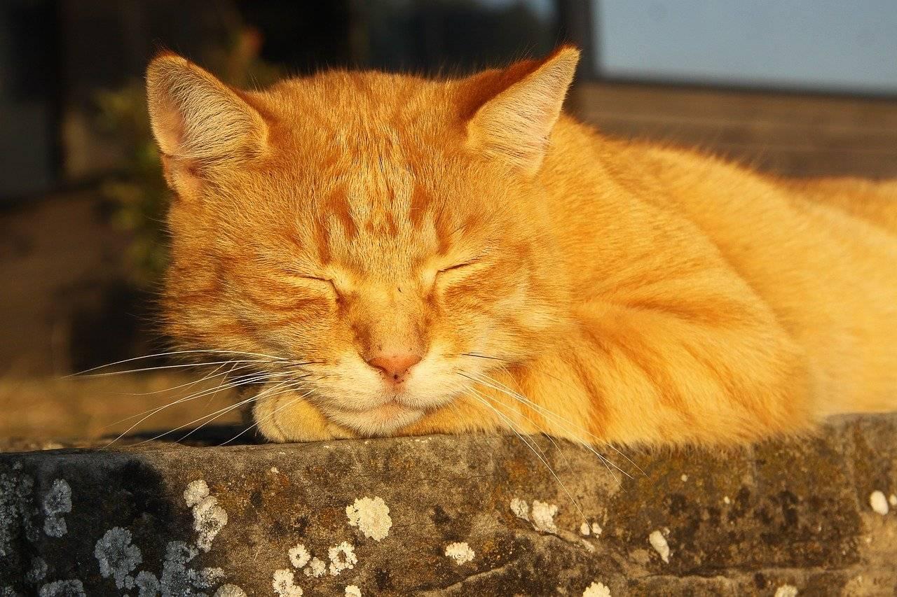 Рыжий кот в доме приметы: характер и нрав огненных котов, что означает, если приблудился рыжий котенок, как кошку сделать талисманом.
