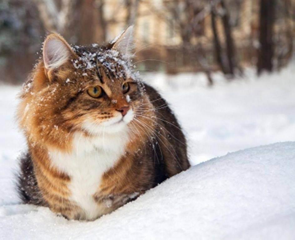 Кормление кастрированного кота - полезные рекомендации