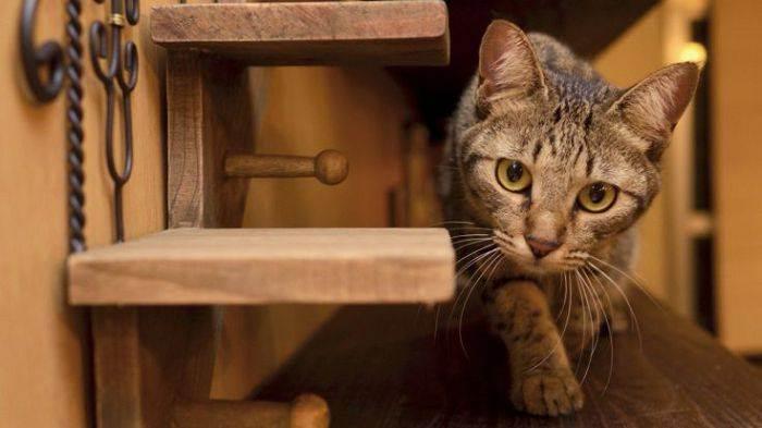 Кошки: церемония знакомства с любимцем - как познакомить кошек, знакомство с домашними животными - всё о кошках и котах