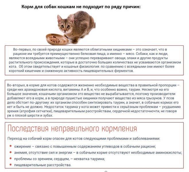 Кормить ли кошку сухим кормом: 7 за и 4 против
