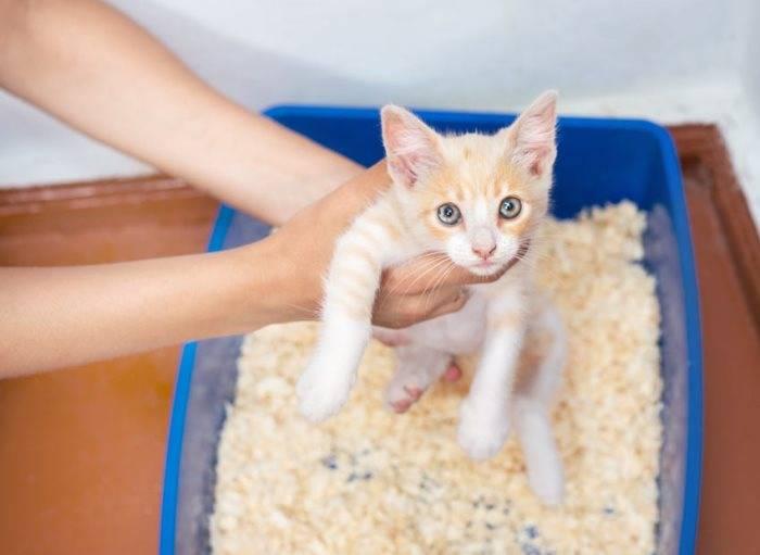 Как приручить дикого котенка к рукам, если его взяли с улицы