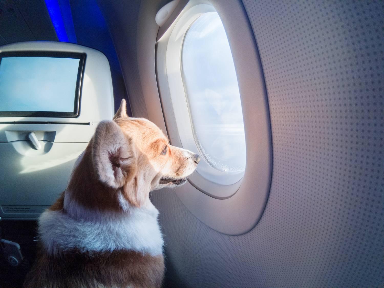 Перевозка животных в самолете: правила и особенности в 2021 году