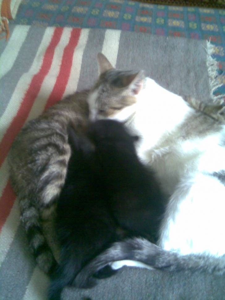 Почему в доме не приживаются кошки: хорошая и неблагоприятная энергия
