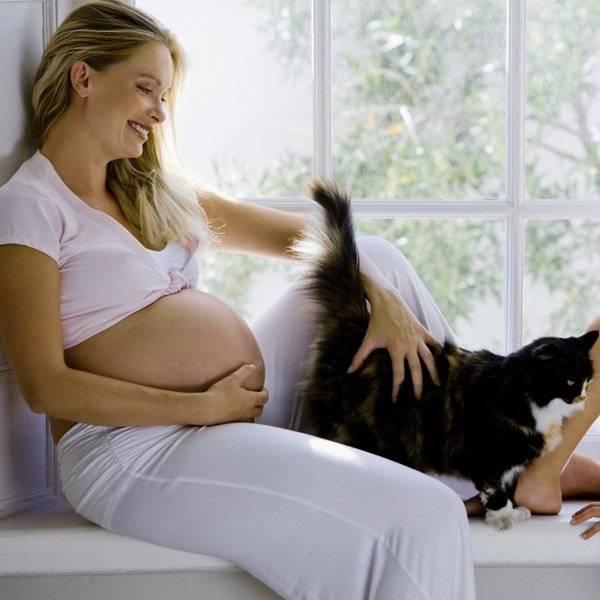Чем опасна кошка для беременных - мифы и реальность