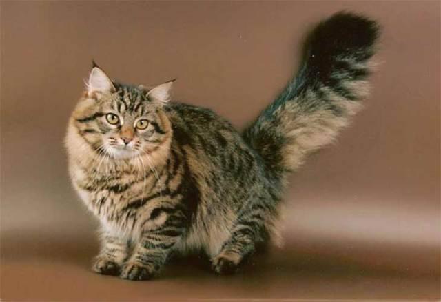 Подробное описание и повадки котов крысоловов - oozoo.ru