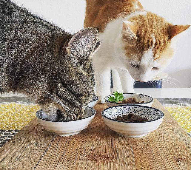 Как отучить кота от корма