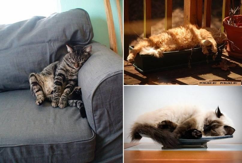 Почему кошки много спят   «зачем и почему»