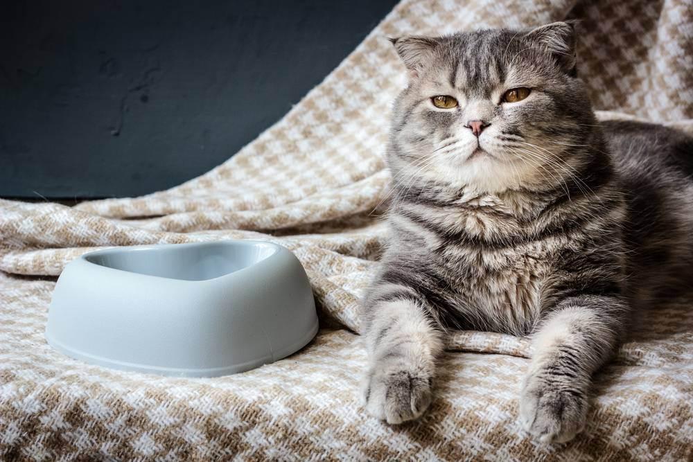 Как правильно выбрать удобную миску для кошки