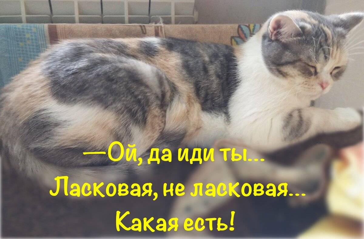 Что нужно делать, чтобы кошка стала ласковее