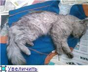 Почечная недостаточность у кошек – причины, симптомы и лечение синдрома