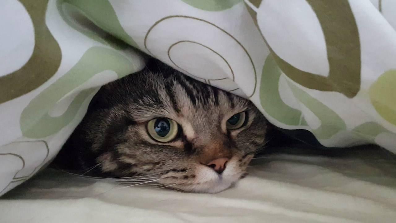 Кошка прячется   все о кошках