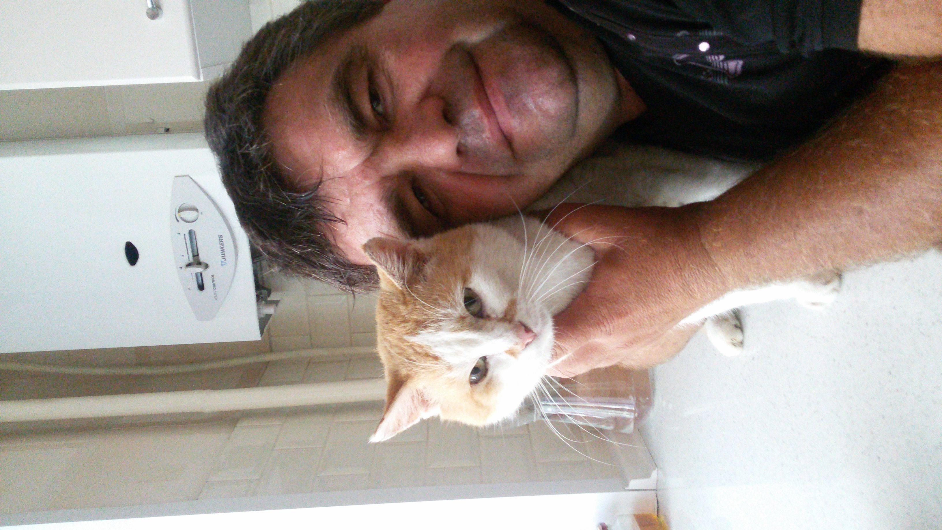 Стерилизация кошек на дому или в клинике - что выбрать?