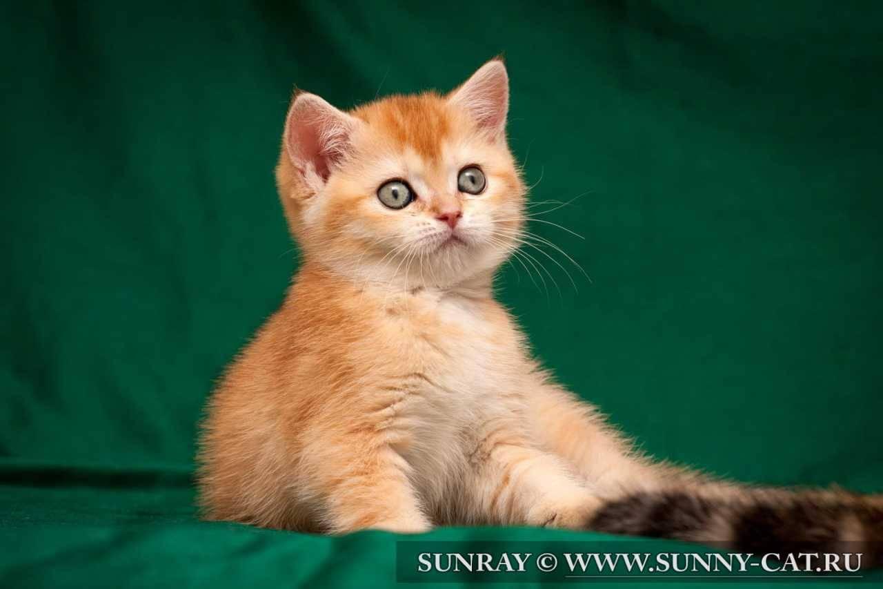 Бывают ли в природе трехцветные коты, или только кошки?