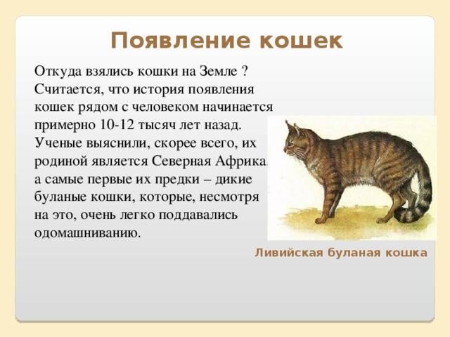 Как появились кошки?
