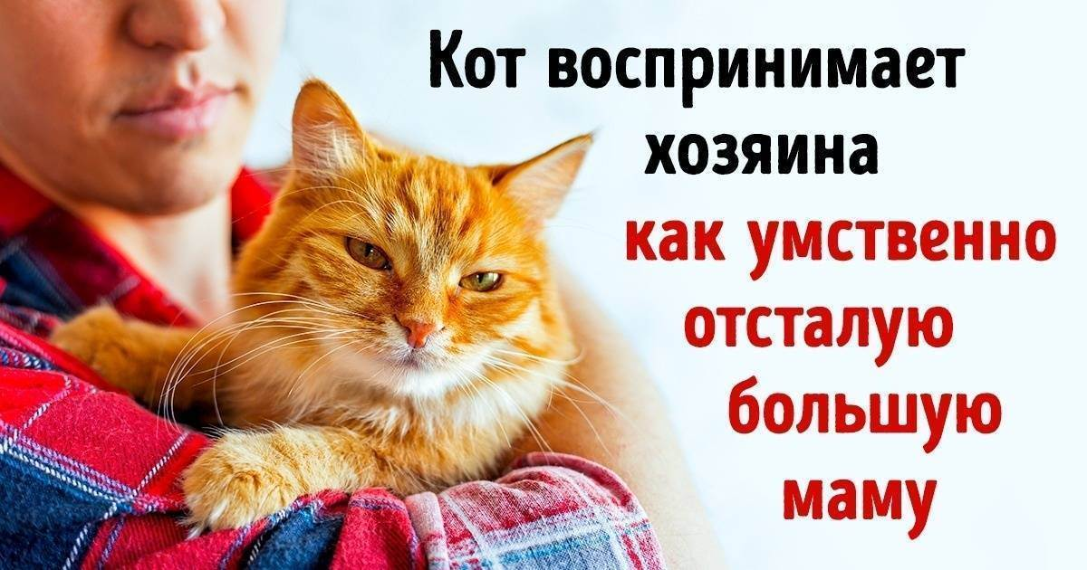 Как кошки манипулируют людьми | взгляд за грань