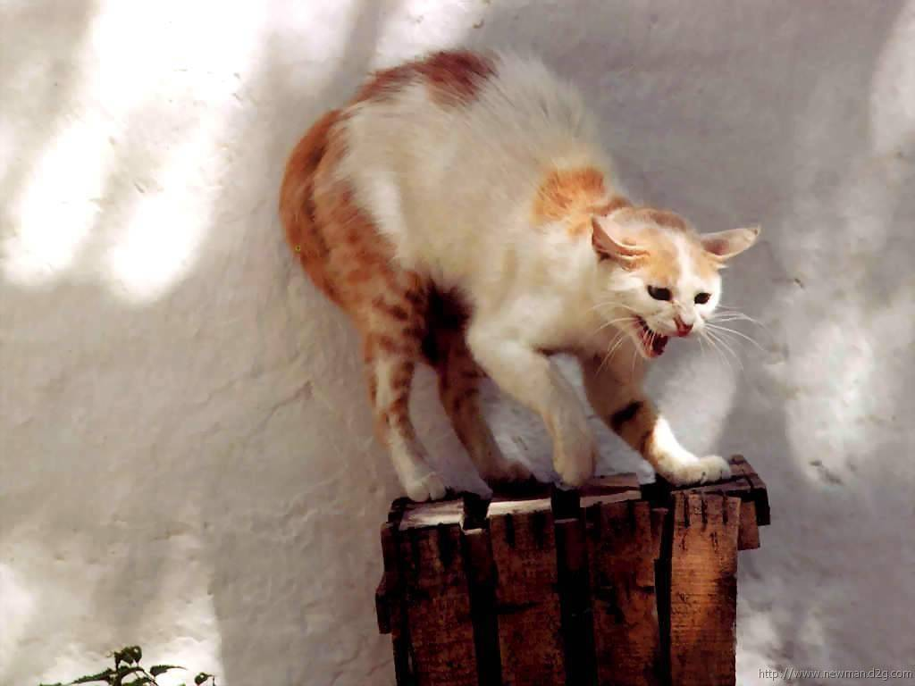 Как успокоить агрессивного или загулявшего кота, испуганную кошку или котенка, который бесится ночью?