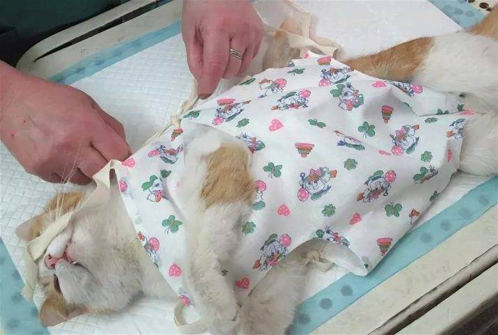 Кошка после стерилизации. есть вопросы!!!