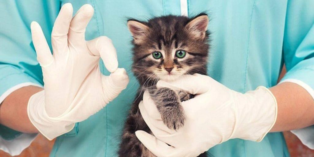 Прививки кошкам от лишая цена - прививки