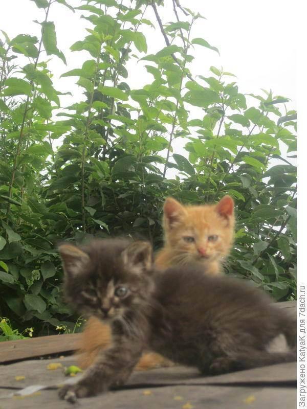 Можно ли купать кошку дегтярным мылом. дегтярное мыло от блох у кошек: как применять, и есть ли эффект