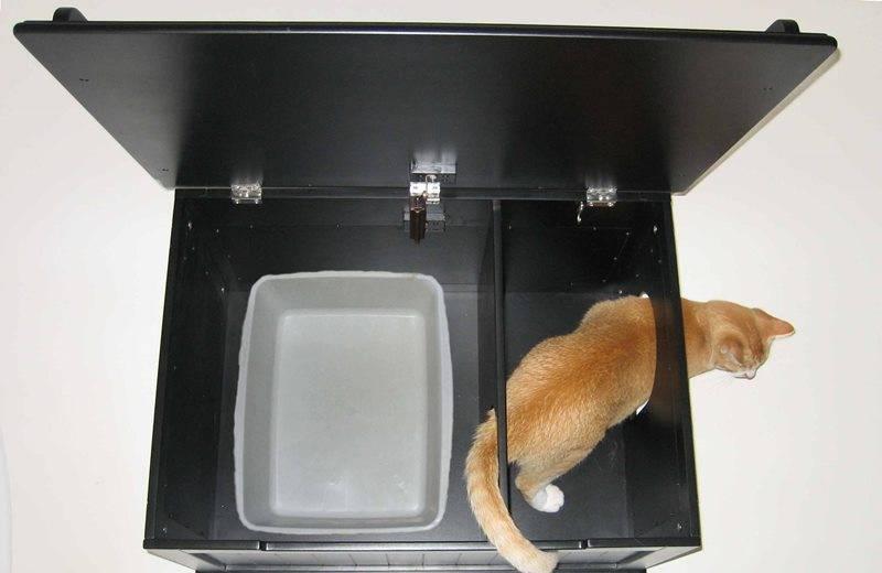 Автоматический кошачий туалет: обзор возможностей чудо-устройства