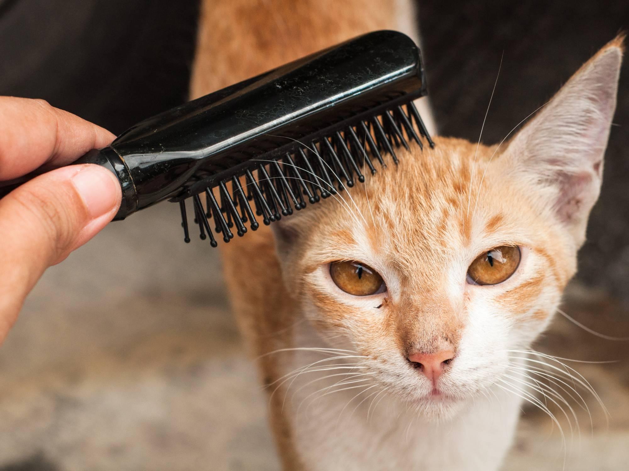 Расческа, колтунорез, рукавица для вычесывания, пуходерка для кошек: как ухаживать за шерстью и бороться с колтунами, причины их появления