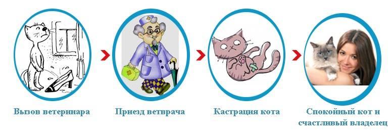 Подготовка кошки к стерилизации: что нужно сделать перед, рекомендации, советы ветеринаров, основные правила и послеоперационный уход