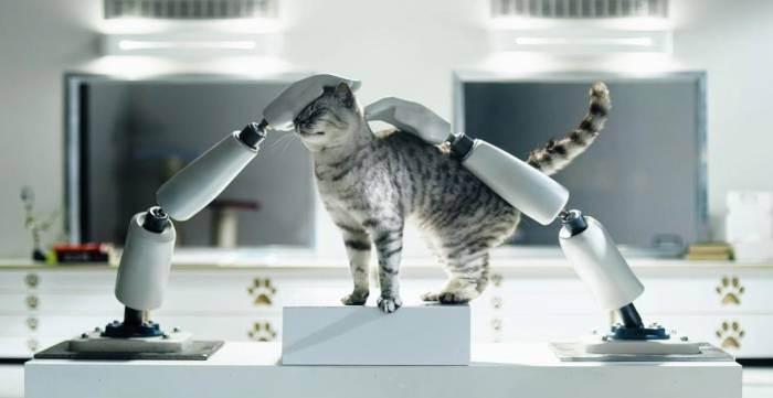 """Презентация на тему: """"цель исследования: изучить особенности поведения и повадок домашней кошки."""". скачать бесплатно и без регистрации."""