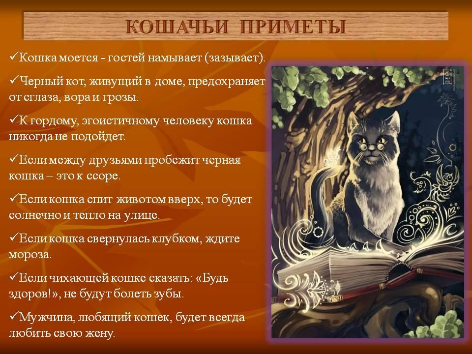 Эти мистические домашние питомцы: приметы и поверья про кошек в доме и за его пределами