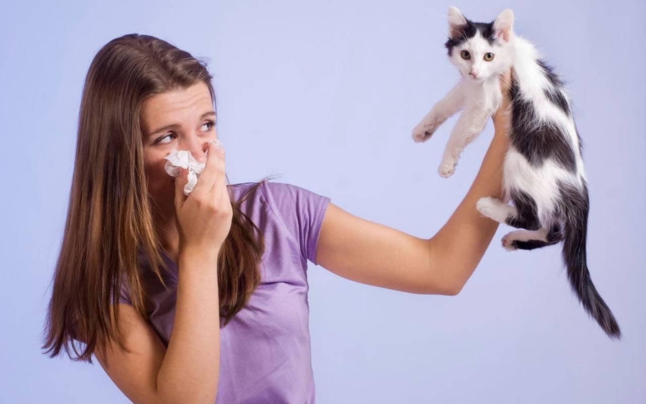 Как лечить аллергию у кошек в домашних условиях: симптомы и фото