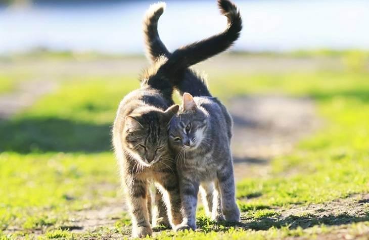 Можно ли гулять с кошкой зимой. мерзнут ли кошки зимой? как впервые выгуливать кошку