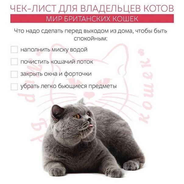 Сколько стоит британский котенок: различия котят по цене, питокники
