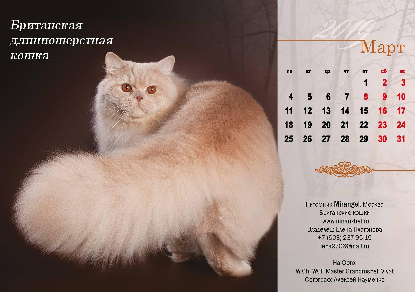 Длинношерстные кошки: названия пород, их описания и фото
