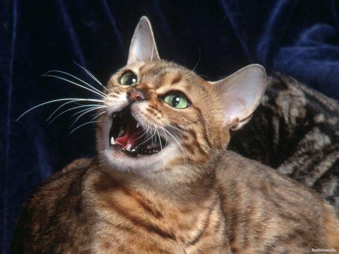 Мяуканье котят