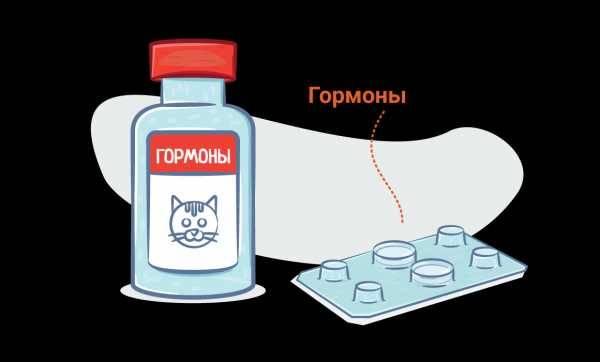 Способ применения гормональных уколов депо-провера для кошки против гуляния