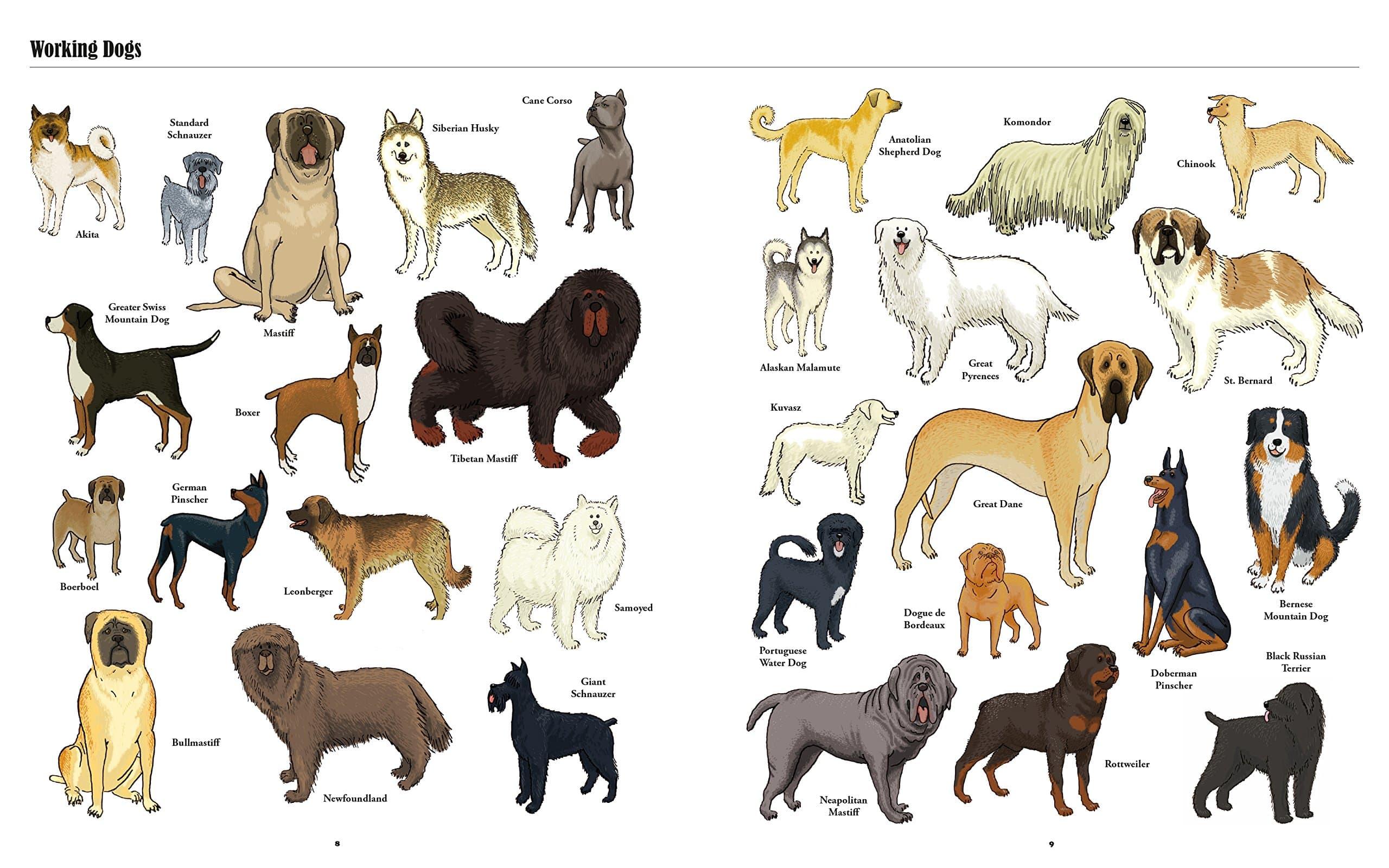 10 самых популярных собак средних размеров