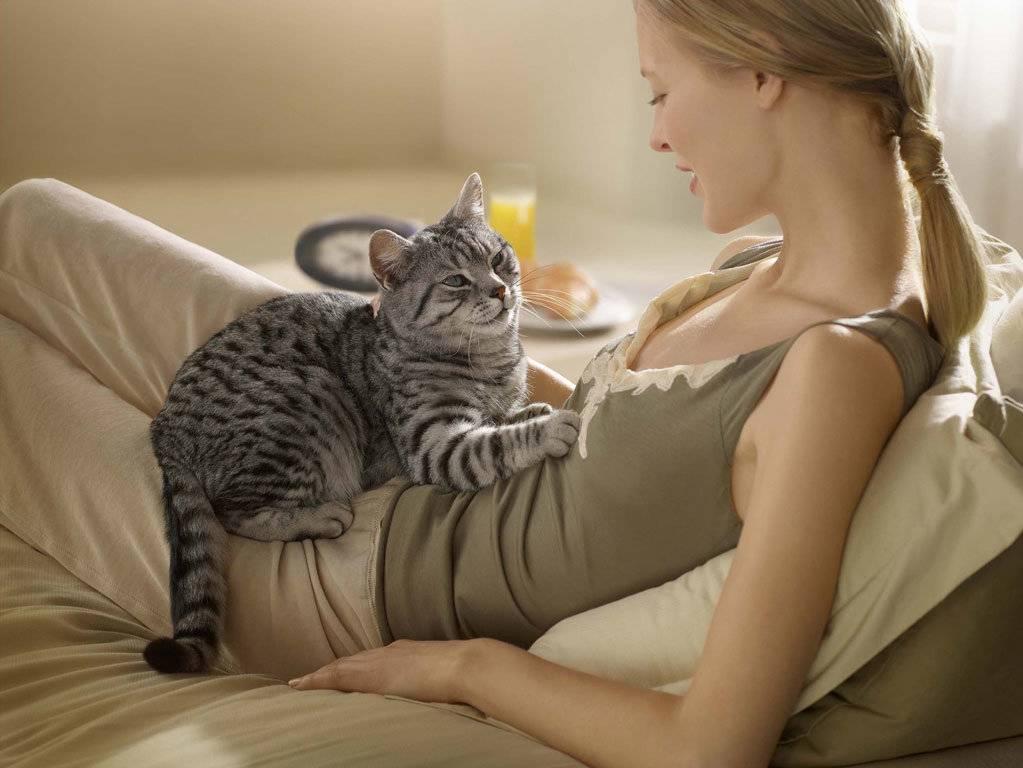 Почему кошки ложатся на человека, в том числе на живот беременным, на больное место