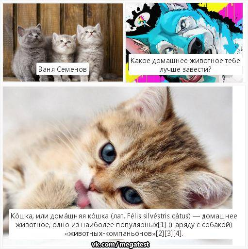 Кого завести – кота или кошку?